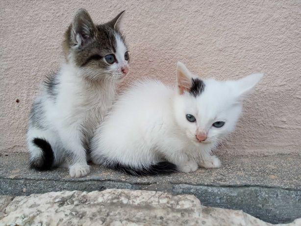 Котята, кошенята терміново, безкоштовно!