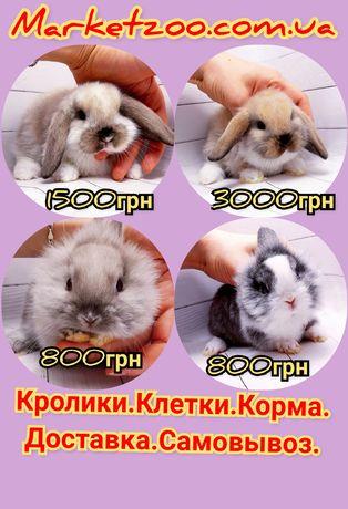 Карликовые мини кролики торчеухие и вислоухие крольчата и клетки