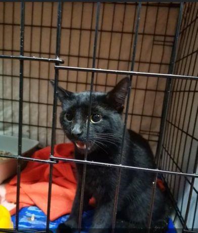 Znaleziono czarnego kota