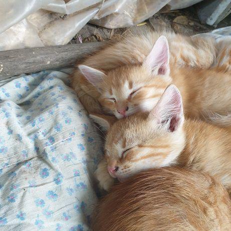 Отдам прекрасных котят в добрые руки