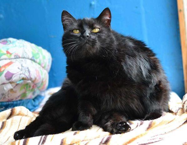красива вальяжна стерилізована кішка 3р