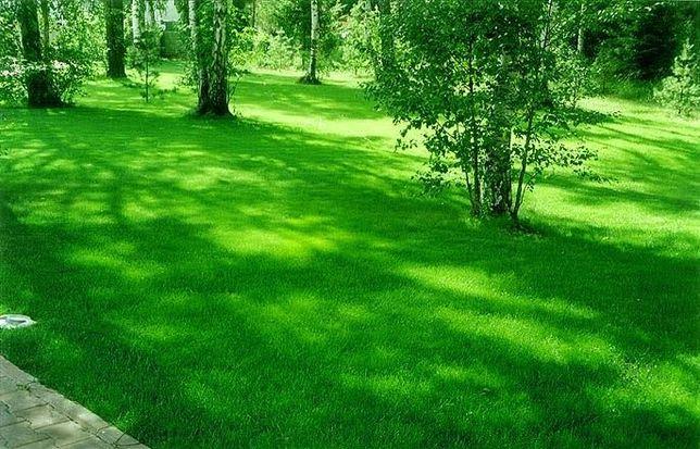 Автополив и посевной газон. Очень низкая цена, гарантия качества