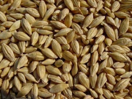 Продам зерно ячмень
