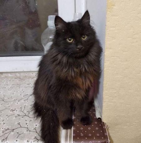 Кот черный 7мес.Кошечка.Кот.Котик.Киса.