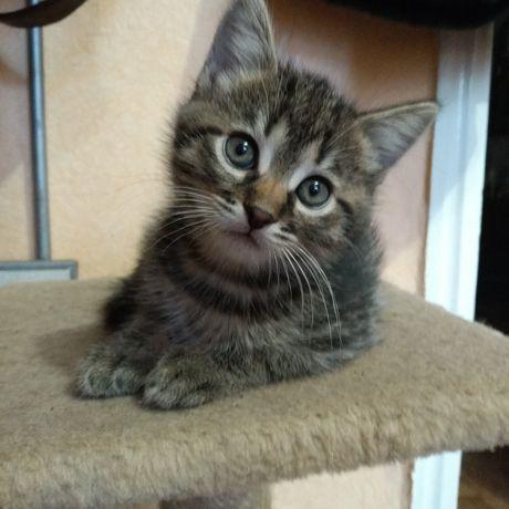 Продам котят метисов