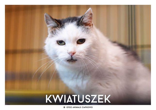 Kwiatuszek - nieśmiała koteczka szuka domu! OTOZ Animals Ciapkowo.