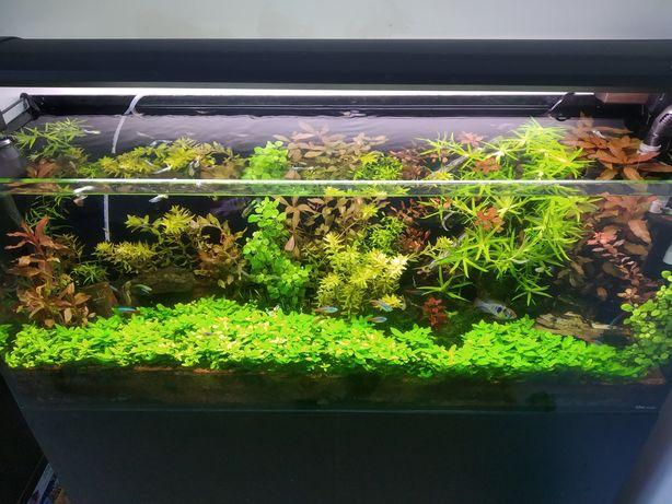 Calha de Iluminação de aquário Odyssea Dual Pro T5 HO Series