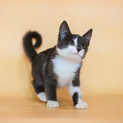 Котенок Люси ищет своего человека котенок котята кошеня кот кошка