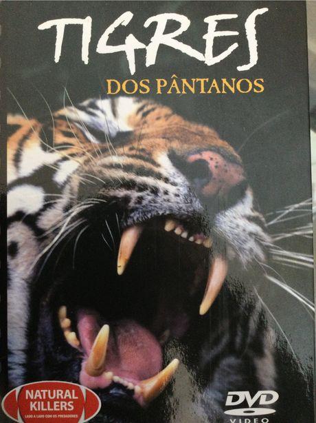 DVD -Documentário sobre os Tigres de Bengala