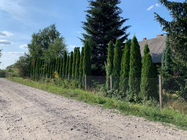 Dom z siedliskiem na wsi - bezpośrednio bez pośredników