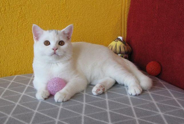 Очаровательный белый страйтик. Яркий нарядный малыш-подросток! Киев.