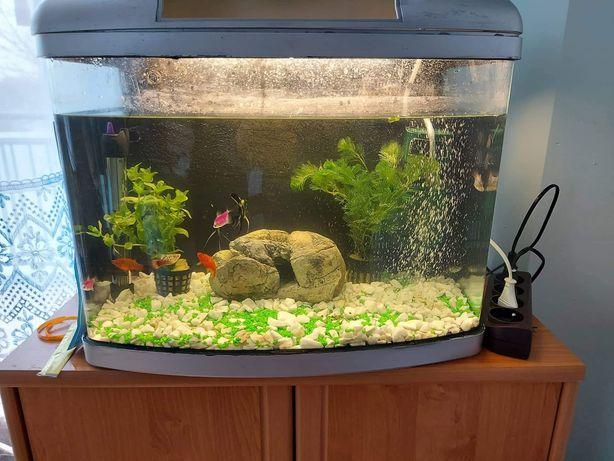 Akwarium bez wyposażenia