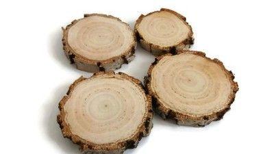 plastry drewna brzoza gruba kora 12-14 cm, gr. 2cm