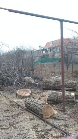 Спил деревьев любой сложности, омоложение. Стрижка елок. Покос травы