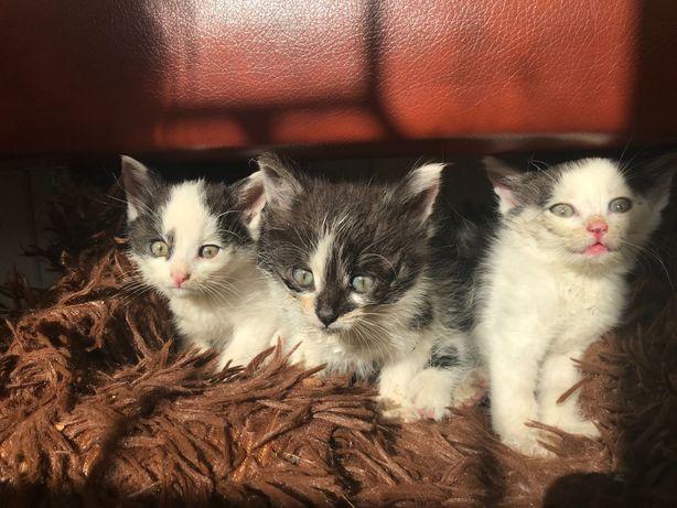 Нашла на улице 3 замечательных котят.Им нужен дом