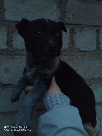 Милый щенок в хорошие руки бесплатно. Отдам щенков даром. Срочно!