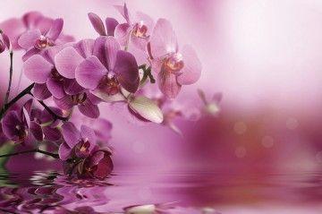 "Фотообои ""Орхидеи"""