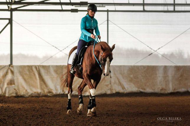 Trening koni ,trening pary jeżdziec -koń