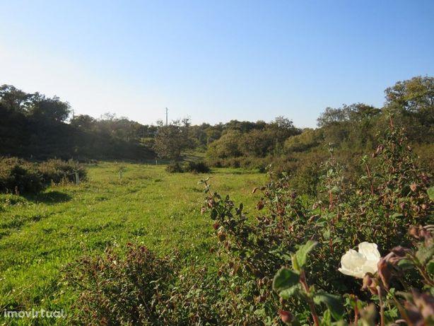 Terreno no concelho de Almodôvar com 5,6 hectares bem loc...
