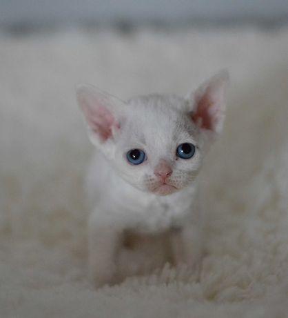 Mała koteczka NIUNIA
