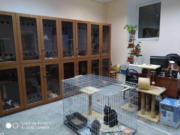 Гостиница для кошек, мелких собак, зоогостиница, передержка