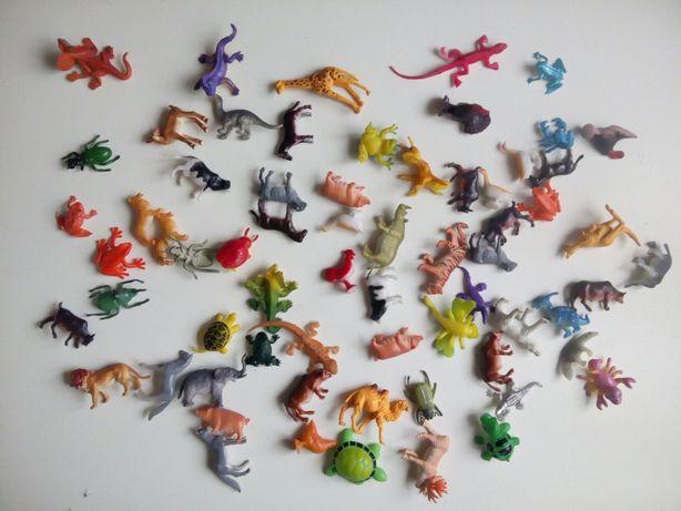 Животные Насекомые