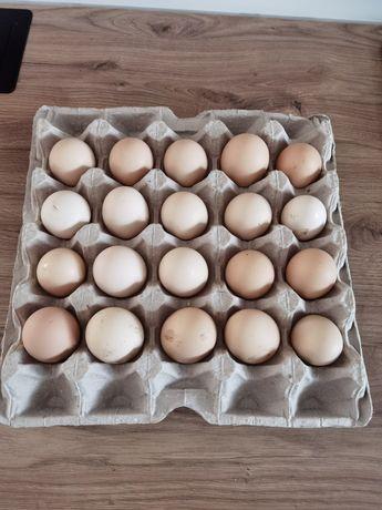 Świeże jaja od kur z własnego chowu.