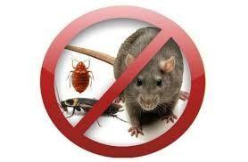 Знищення комах та гризунів з гарантією!!!
