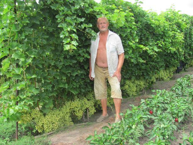 Саженцы винограда прекрасного качества. 40 сортов ! ! !