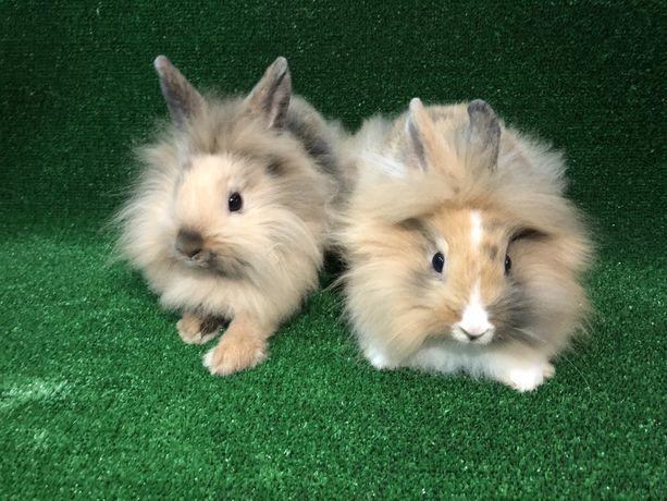Кролики декоративные кролики декоративні