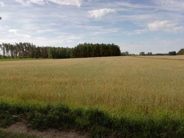 Ziemia rolna, łąka, pastwisko, pole, las, w gminie Knyszyn
