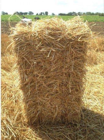 Солома пшеничная и ячневая в тюках. Садовая мебель из тюков соломы.