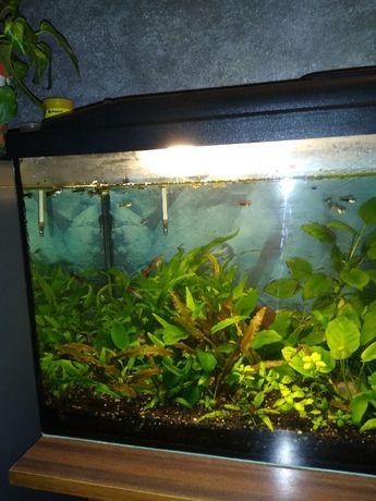 Zestaw akwarium 120l