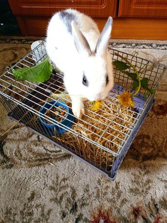 Декоративный кролик.