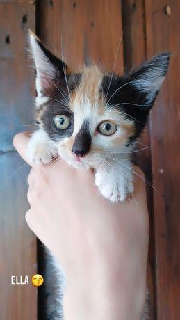 Gatos bebes disponíveis para adoção