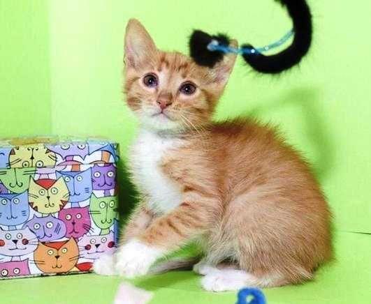 Рыжий котенок мальчик 3 месяца в добрые руки