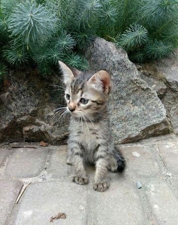 Отдам котёнка лесного окраса ,мальчик ,2 месяца