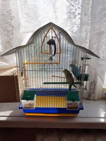 Продам 2 попугая.