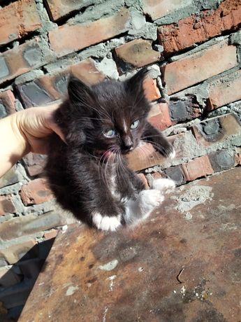 Котик. Котёнок мальчик.