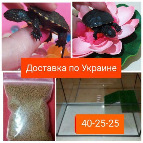Комплект на подарок: черепаха маленькая ( 2шт.) + террариум+корм.