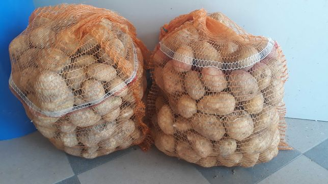Ziemniaki Vineta bez nawozów