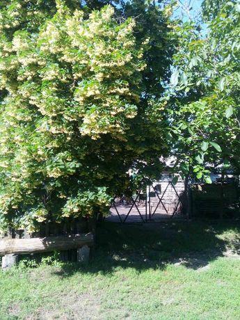Продается дом в селе Кудашево (Весёлый Кут) Днепропетровская область