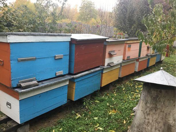 Улья пчелиные