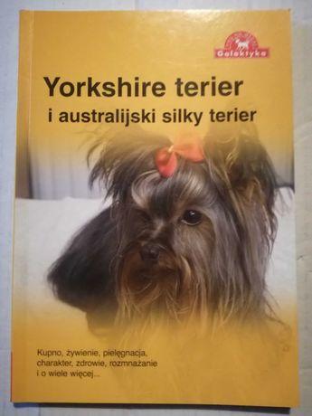 Yorkshire terier i australijski silky terier- poradnik.