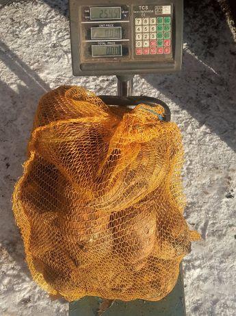 Sprzedam burak pastewny w workach po 25kg cena 15 zł za worek