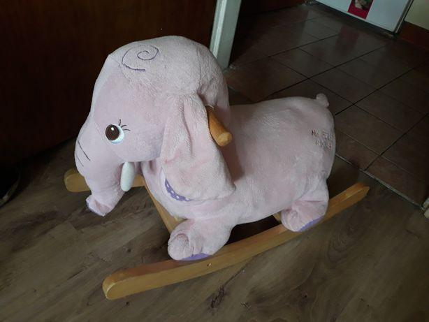 Bujak słoń na biegunach