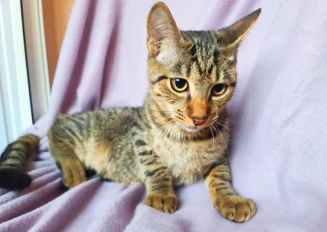 Забавный полосатик, котик Чарльз, котенок, кот 3,5 мес