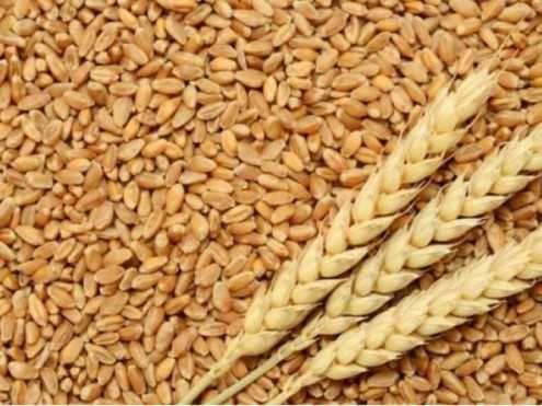 Продається пшениця урожай 2021 с Банилів Вижницького району