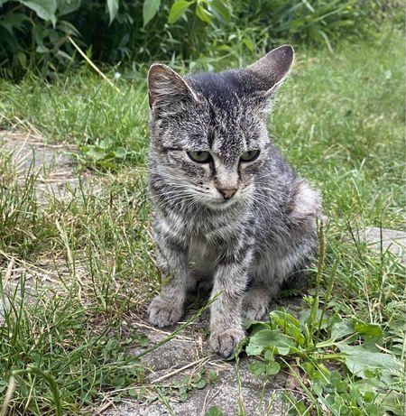 kotka szuka nowego domu