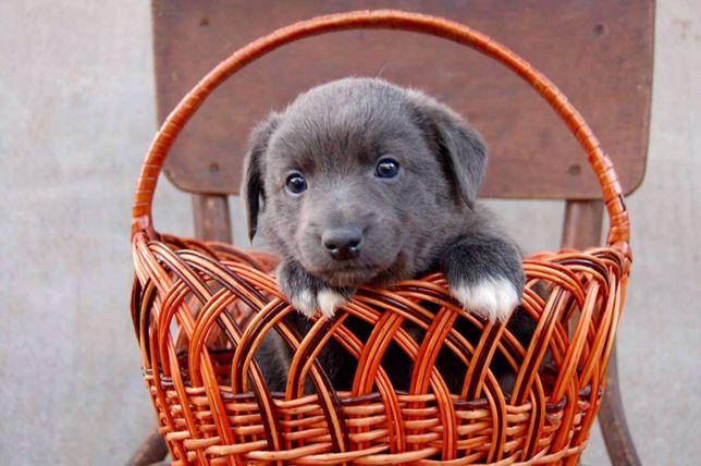 Щенок мальчик, в добрые ручки , щенок , собака